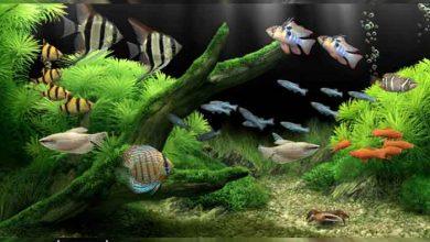 Photo of Dream Aquarium Screensaver v1.27 اسکرینسیور آکواریوم رویایی
